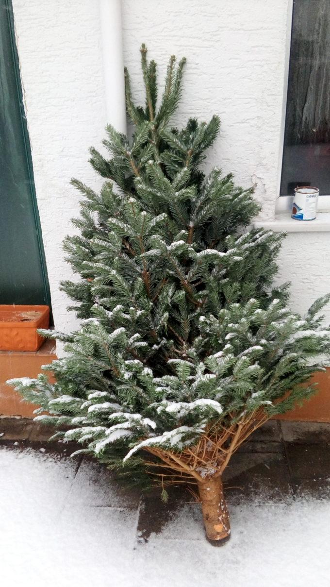 ドイツ クリスマスツリー